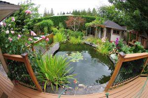 backyard pond p
